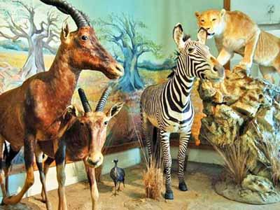 Iran nature and wild museum